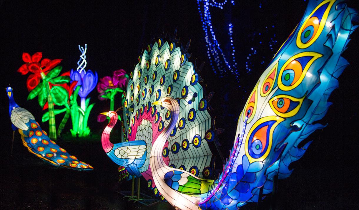 Magic lantern ticket prices