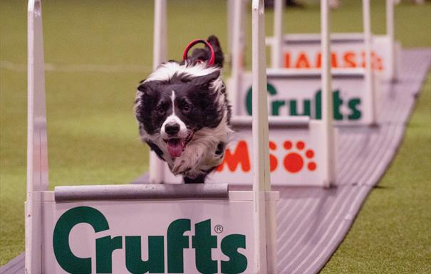 Crufts 2019. Credit Beat Media and the Kennel Club